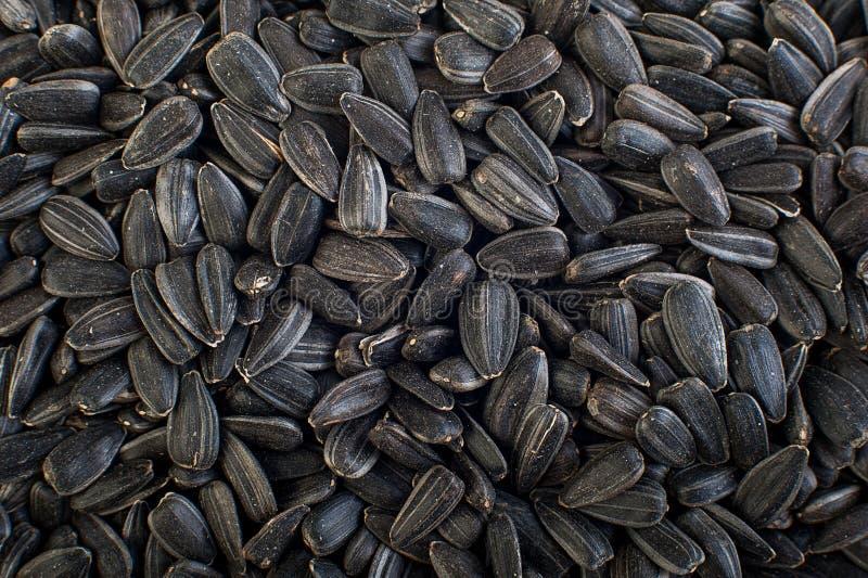 Sunflower seeds close up. Macro. Whole background. stock photography