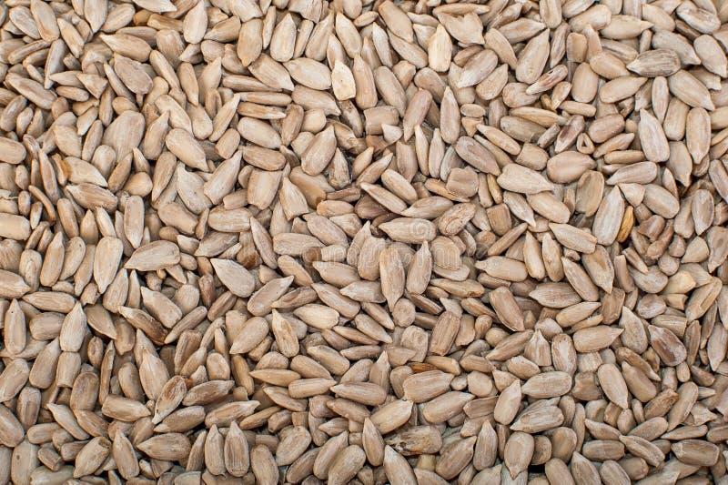 Sunflower seeds close up. Macro. Whole background. royalty free stock images