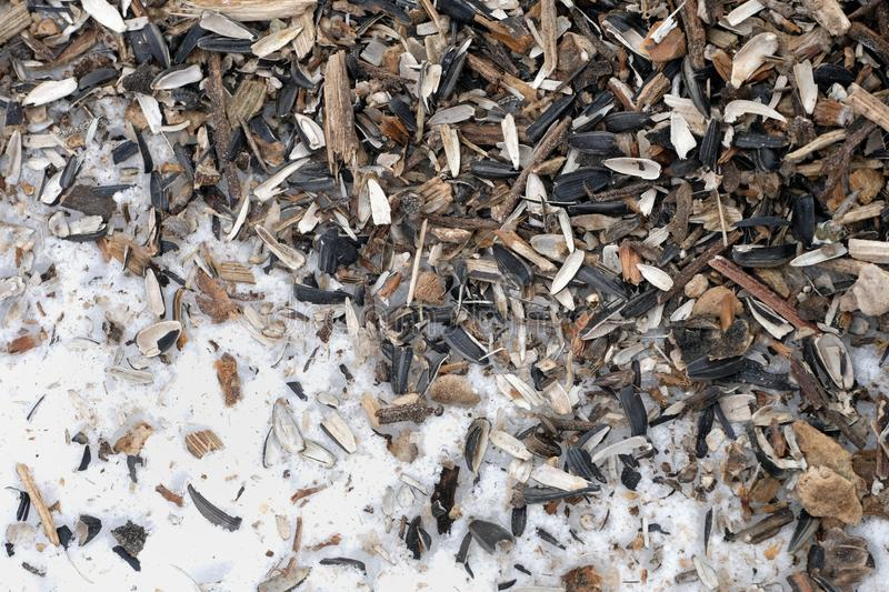 Sunflower seeds on snow. Sunflower seeds and husk spread out on the snow royalty free stock images