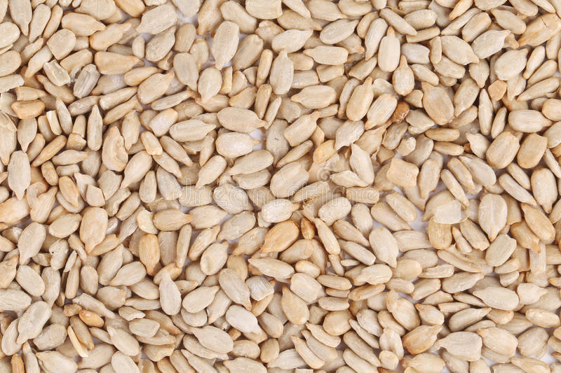 Download Sunflower seeds. stock photo. Image of nutrition, plant - 41530018