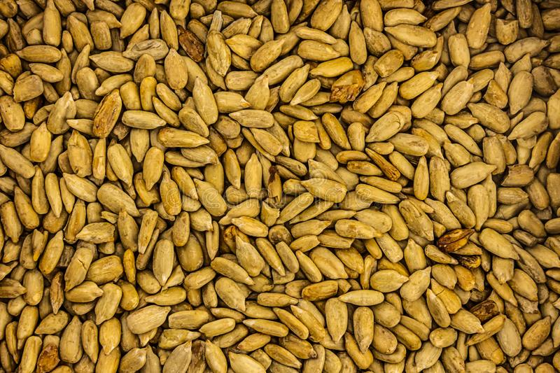 Sunflower seeds peeled light beige background culinary source of oil natural background royalty free stock photography