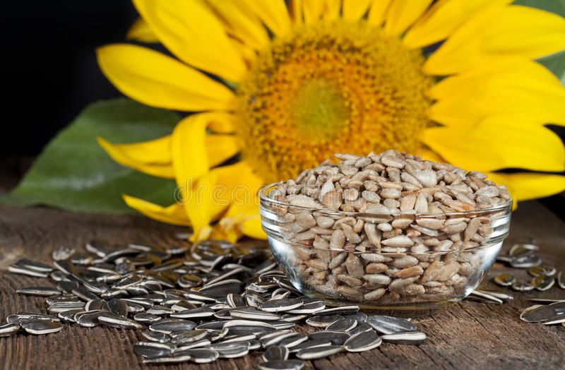 Sunflower Seeds. Roasted and salted shelled sunflower seeds in glass bowl surrounded by unshelled black and white seeds with sunflower blurred in background stock photos