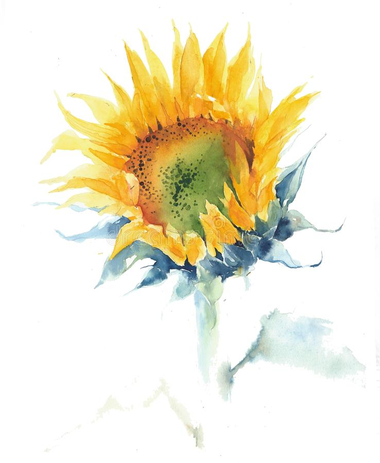 Sunflower single flower summer yellow flower watercolor painting illustration isolated on white background vector illustration
