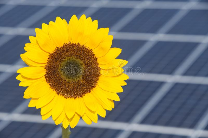 Sunflower And Solar Panel Of Electric Power Station As Symbol For