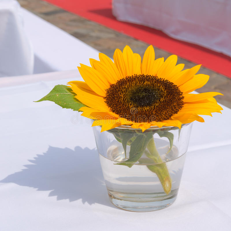 Sunflower on the table. A fresh Sunflower on the table stock images