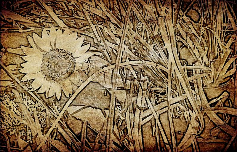 Sunflower on textured old paper background stock images