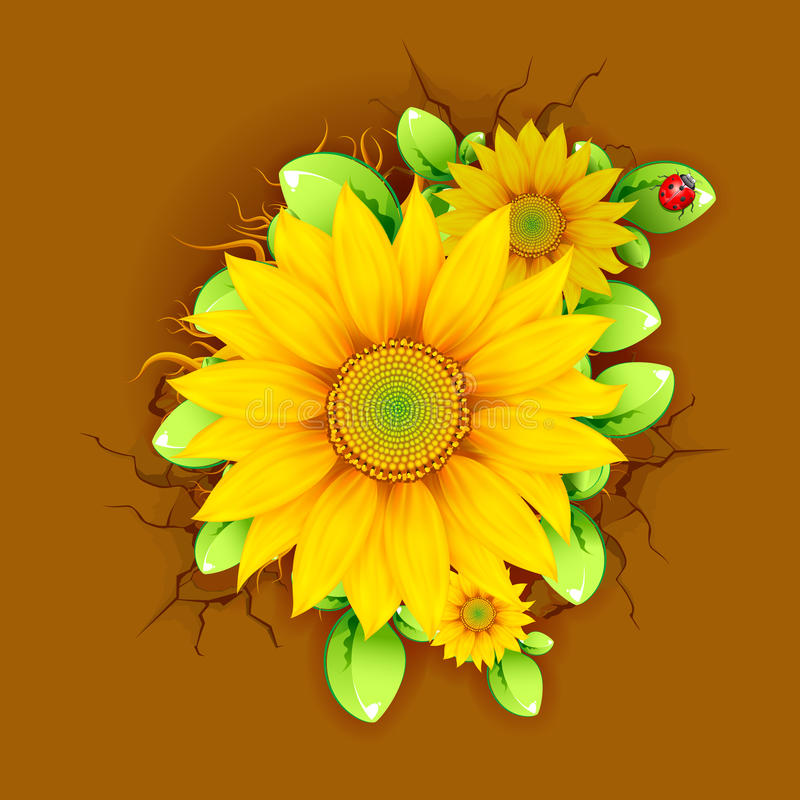 Download Sunflower from Top View stock vector. Image of chamomile - 24483523