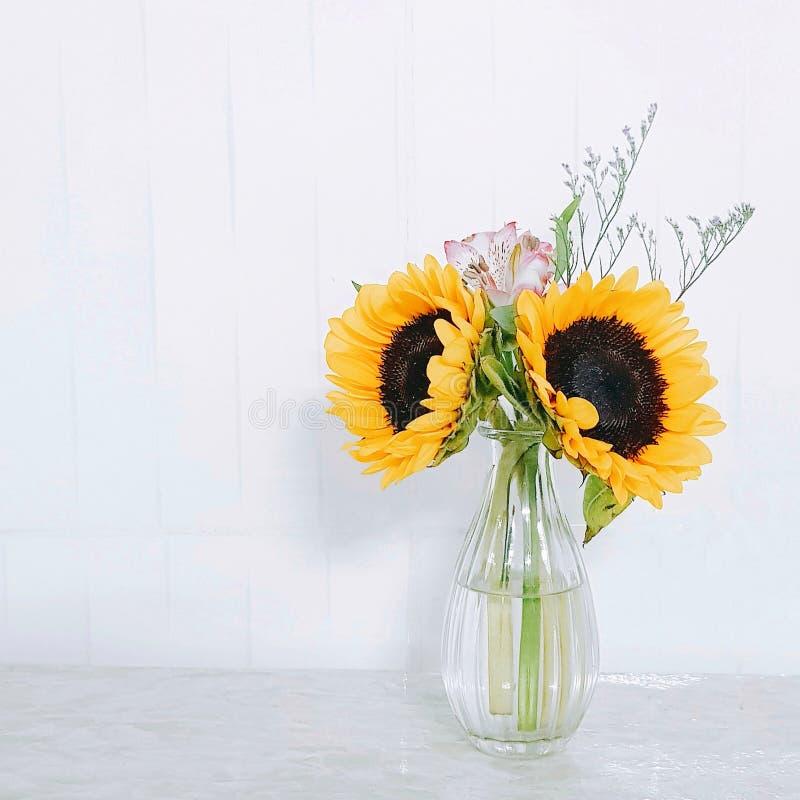 sunflower vase royalty free stock photo