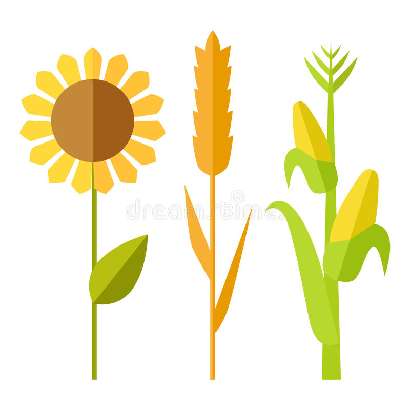 Free Sunflower, Wheat, Corn Vector Illustration. Royalty Free Stock Photography - 74816227