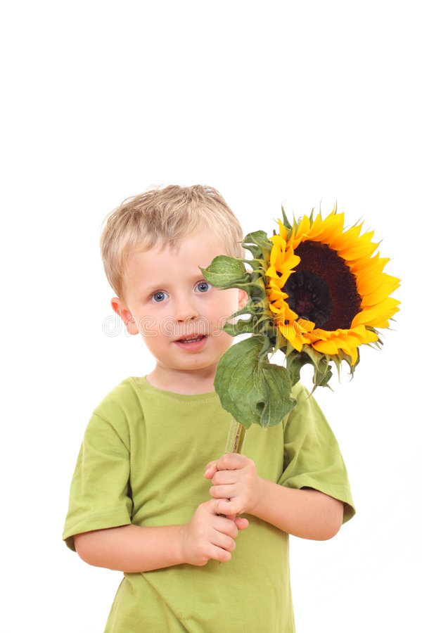Sunflower for you royalty free stock photos