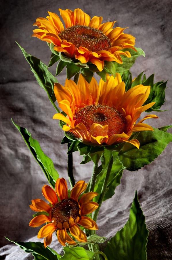 Free Sunflowers Stock Image - 16554361