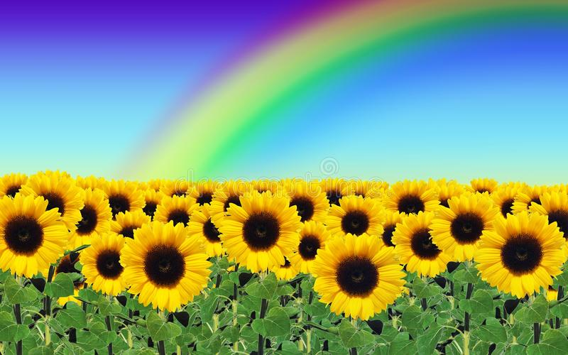 Download Sunflowers stock photo. Image of nature, plant, sunflowers - 26539986