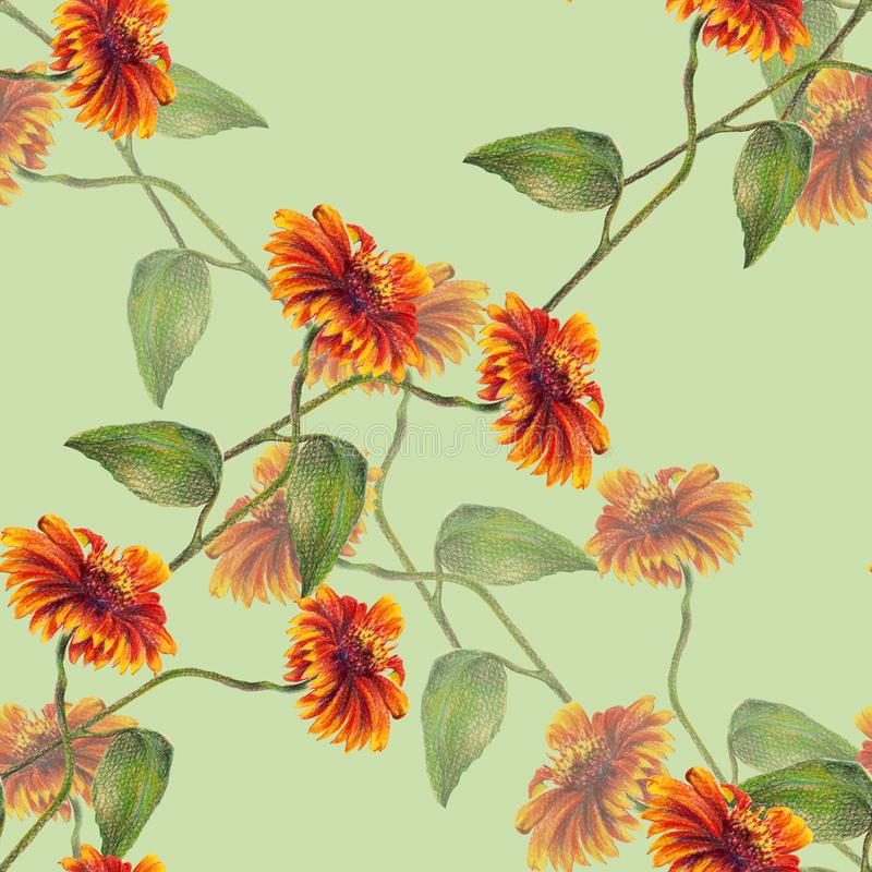 Sunflowers colored pencil on lime green background. Floral seamless pattern. vector illustration