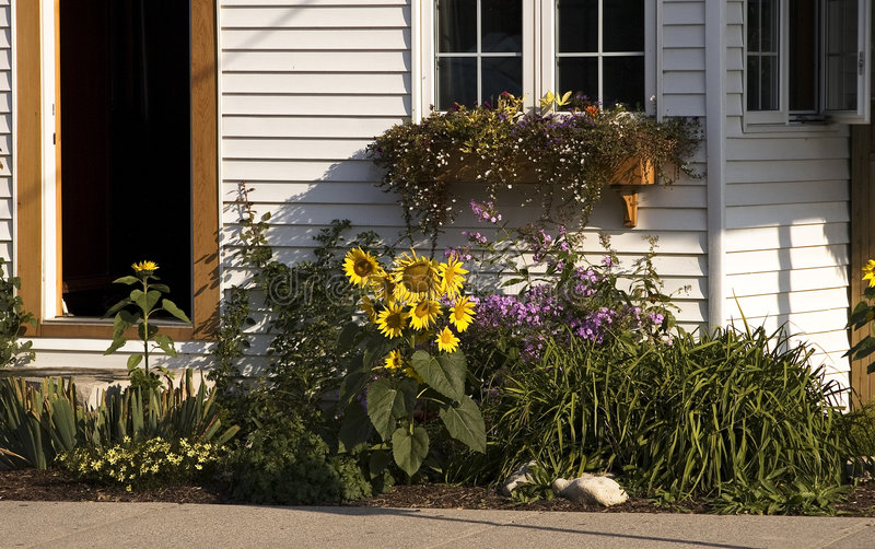Sunflowers and cottage stock photos