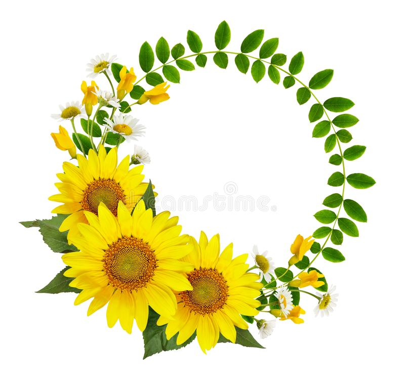Sunflowers, daisies and acacia flowers and green leaves in a round frame stock image