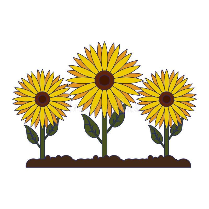 Sunflowers Gardening Cartoon Isolated Stock Vector Illustration Of Houseplant Home 141285471