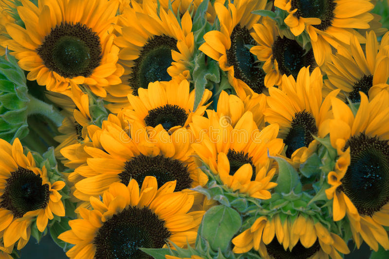 Sunflowers In A Group Free Public Domain Cc0 Image