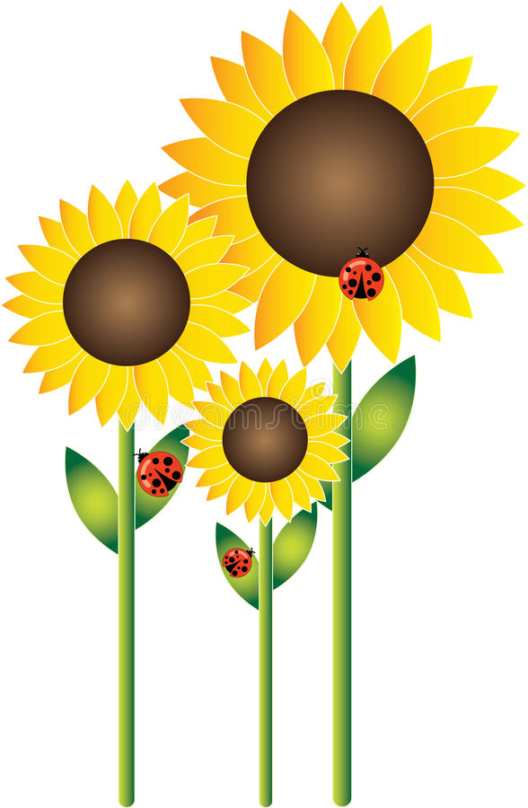 Sunflowers and Ladybirds stock image