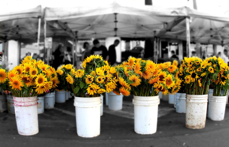 Sunflowers at the market stock photography