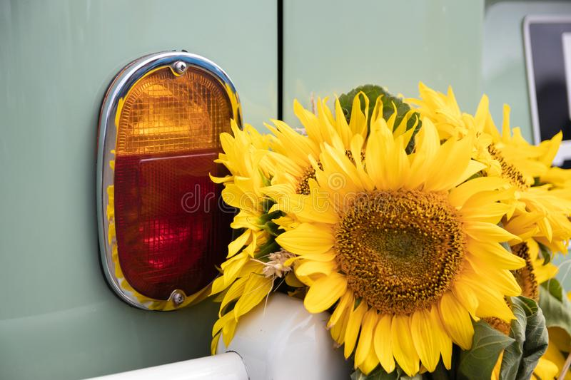 Sunflowers next to the rear brake lights on a vintage car stock photography