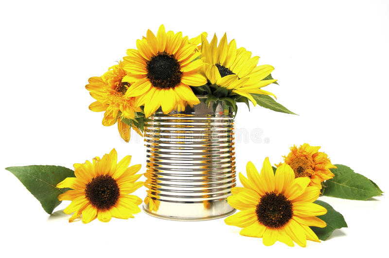 Download Sunflowers In Recycling Tin Royalty Free Stock Photos - Image: 17155848
