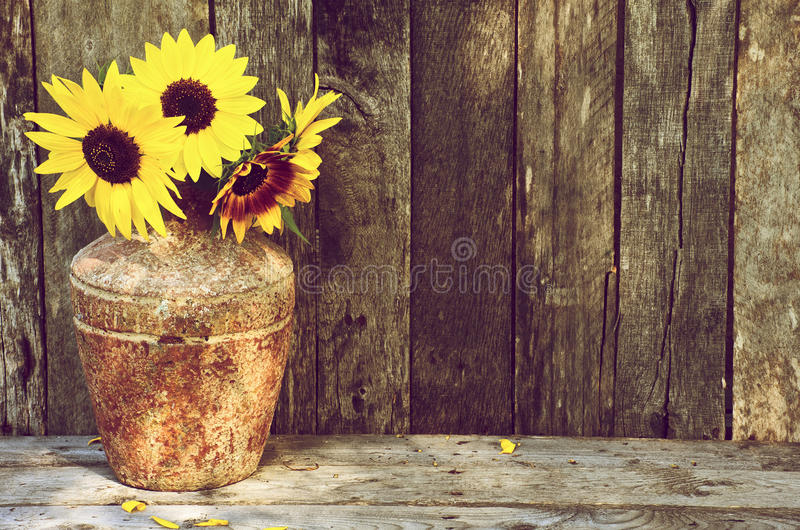 Sunflowers stilllife. High contrast image of a rustic vase with beautiful sunflowers in the partial shade on a rustic, grunge background with copy space royalty free stock images