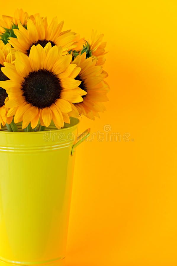 Download Sunflowers in vase stock photo. Image of bloom, blooms - 12326278