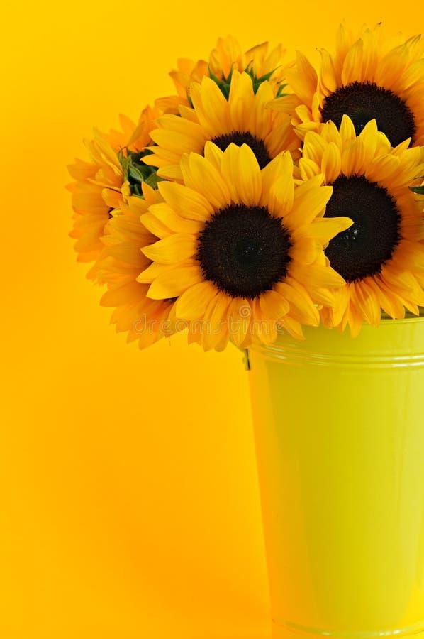 Sunflowers in vase stock photo
