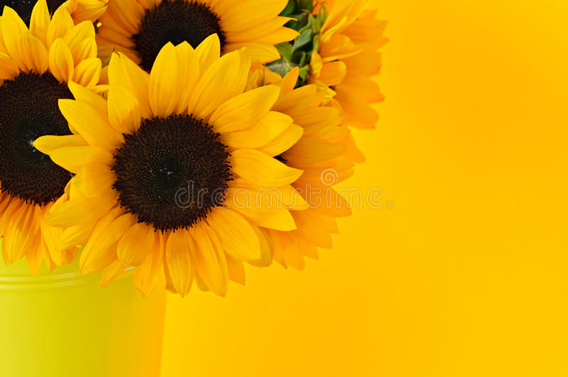 Download Sunflowers in vase stock image. Image of life, flowers - 12370569