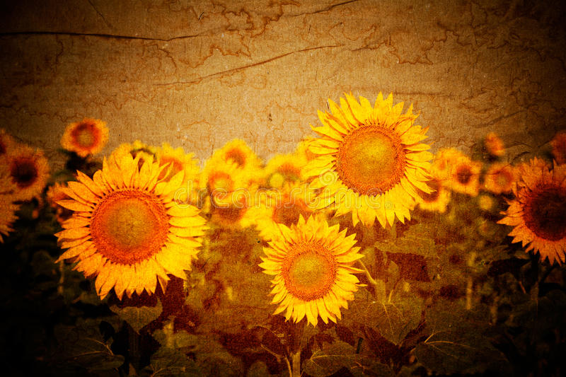 Sunflowers vintage background stock photo