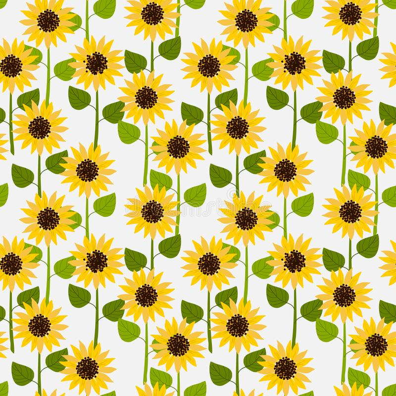Sunflowers on white pale background seamless pattern royalty free illustration