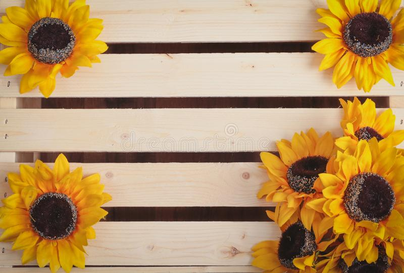 Sunflowers on wood slat background. Sunflowers on a wooden slat background royalty free stock images