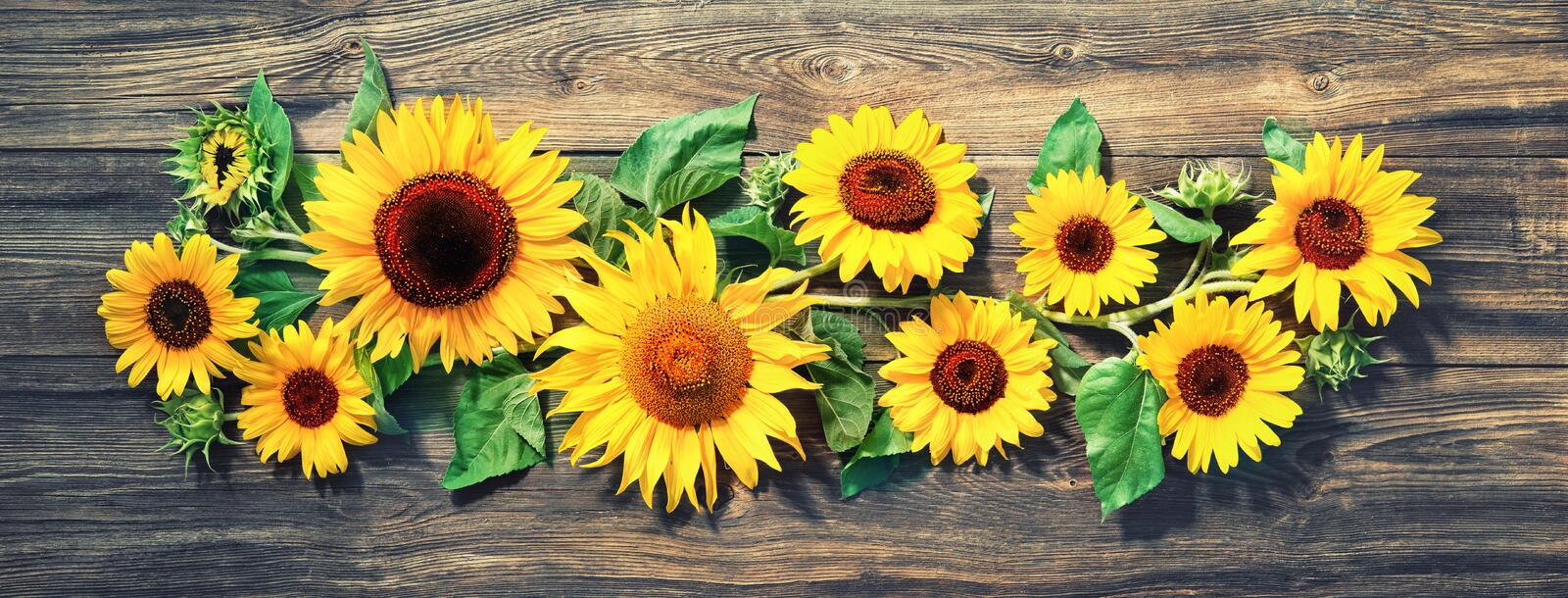 Sunflowers on wooden board royalty free stock images