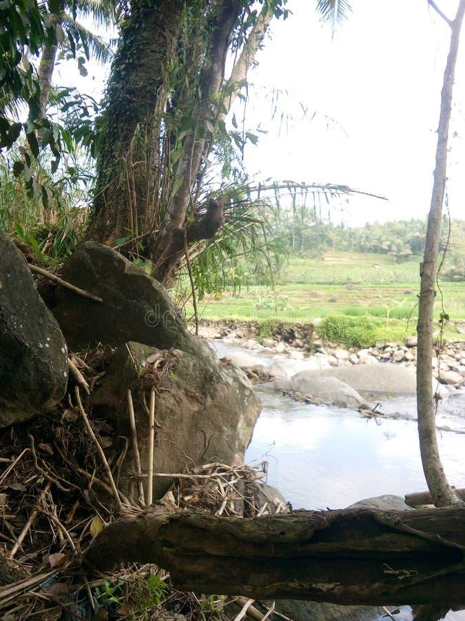 Sungai стоковое изображение rf