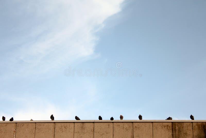 Sungaze dos pombos em um telhado fotografia de stock