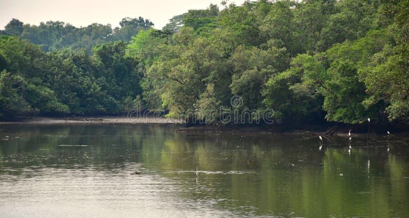 Sungei Buloh, bagna rezerwy park zdjęcia royalty free