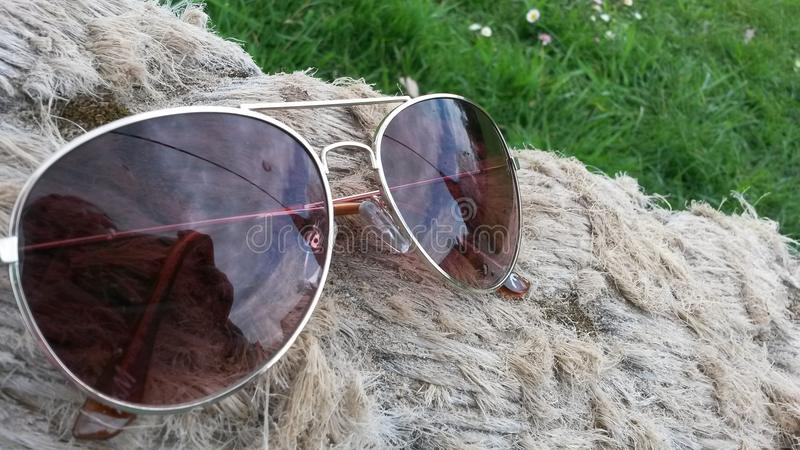 sunglasses imagem de stock