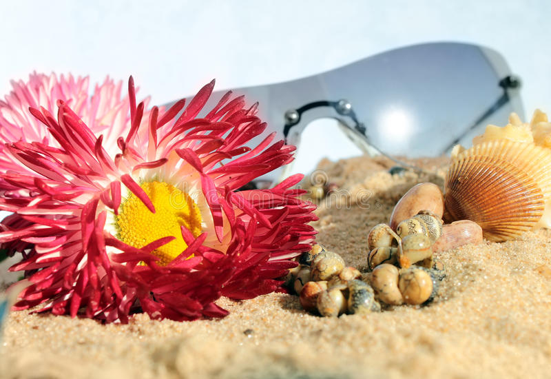 Sunglasses Flowers And Snails In The Sand Stock Photo