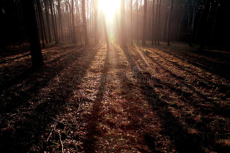 Sunglow forest. Sunshine in natural environment stock image