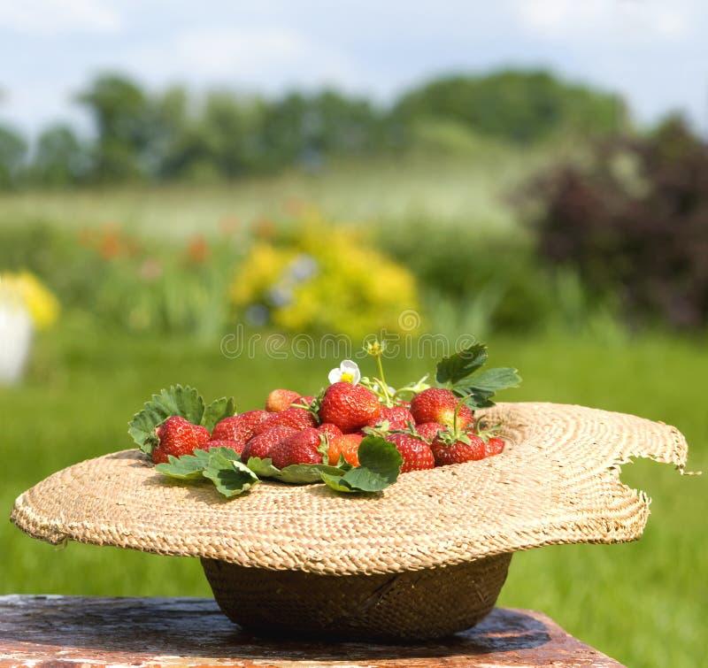 Sunhat complètement de la fraise images stock