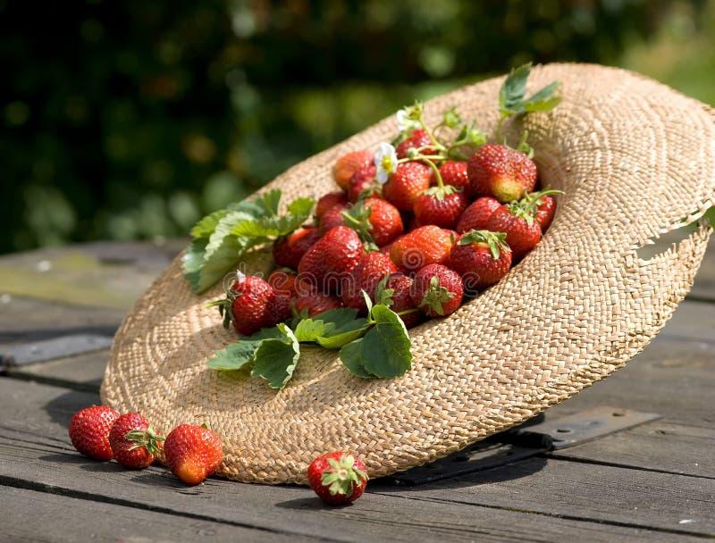 Sunhat de Gardner avec la fraise photos libres de droits