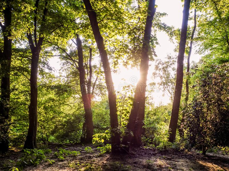 Sunhine forest stock images