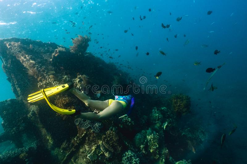 Girl freediver explores the old sunken ship in the Caribbean sea stock image