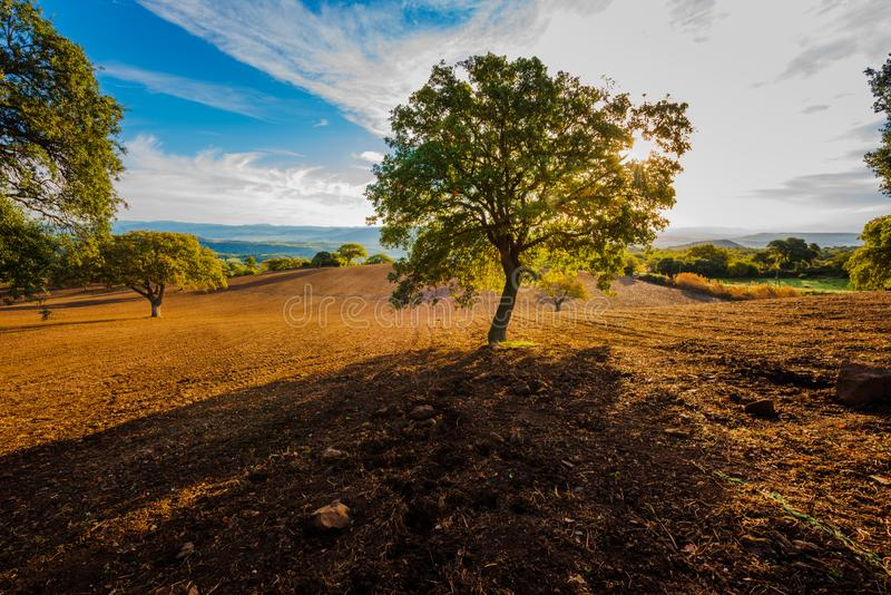 Sunkissed hills and trees with blue sky stock photos
