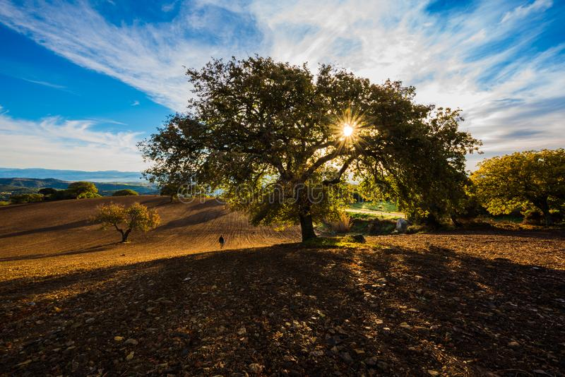 Sunkissed hills and trees with blue sky royalty free stock photo