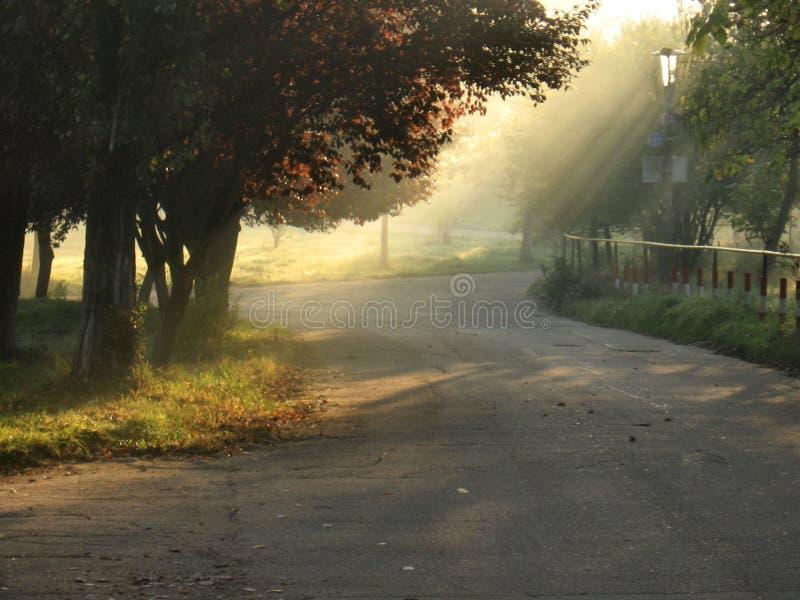 Download Sunlight stock photo. Image of quiet, alley, park, tree - 1418164