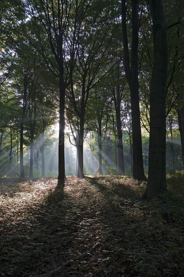 Sunlight in Autumn stock photo