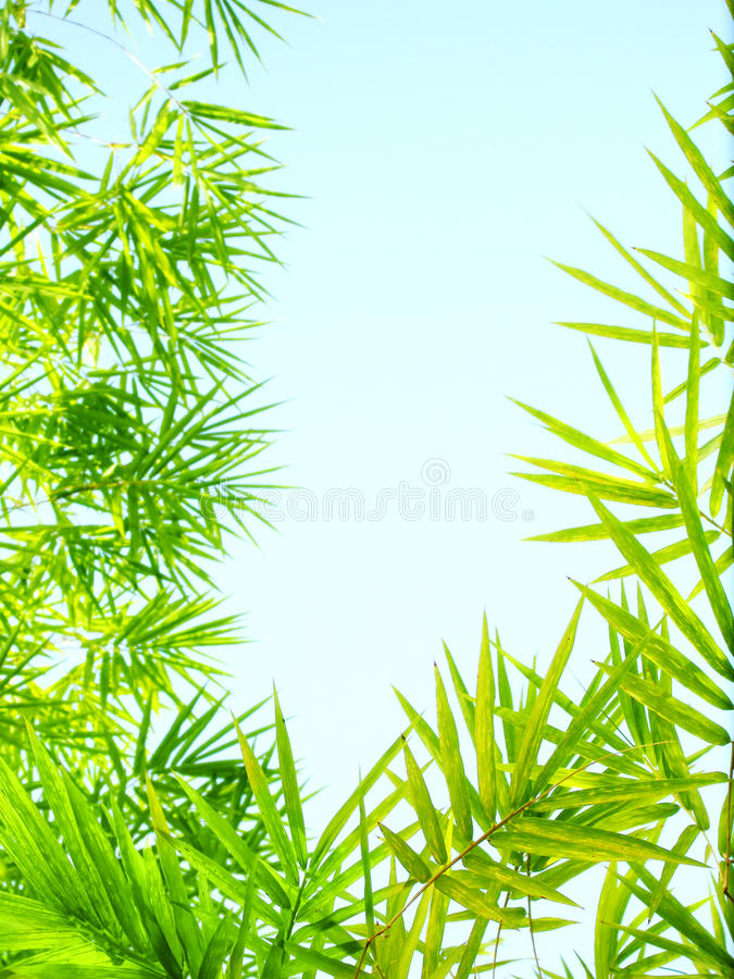 Sunlight bamboo leaves frame royalty free stock photography