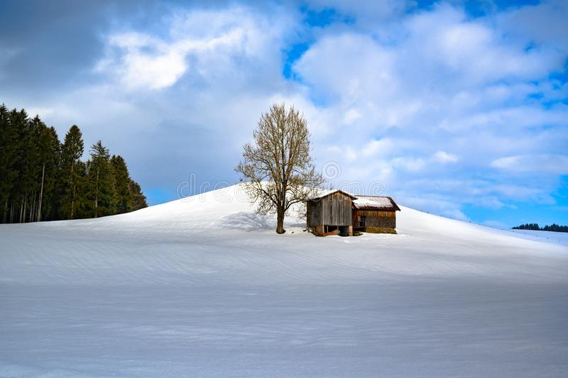 Sunlight on barn and bare tree on hill in snowy winter landscape and fir forest in South Germany. royalty free stock photos