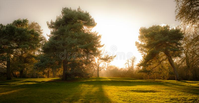 Sunlight behind Pine Trees stock image